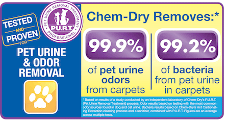Pet Urine Removal Treatment Helps Create A Healthier Home & Remove Pet Odor